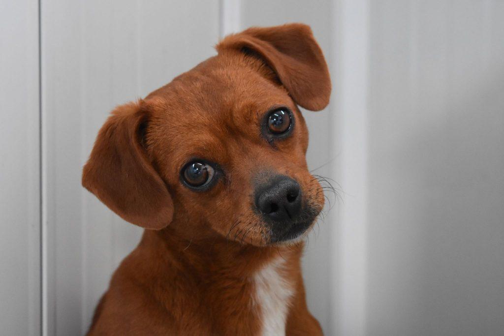 Voorlichting aanschaf hond