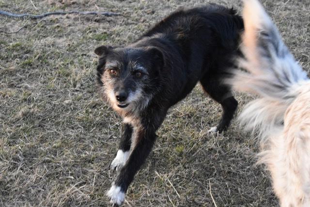 Adoptiehond Anouchka