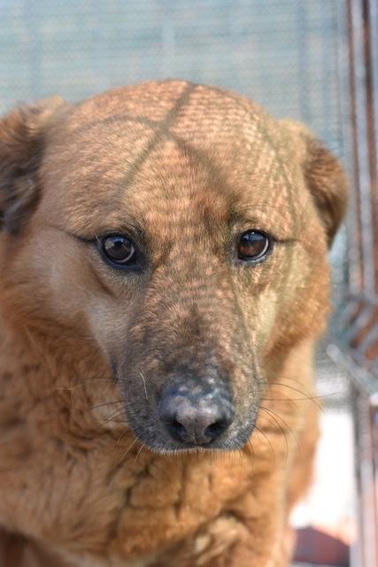 Adoptiehond Denver