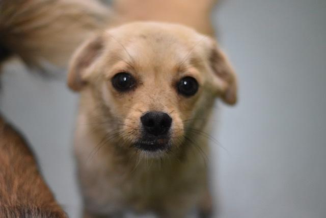 Adoptiehond toy
