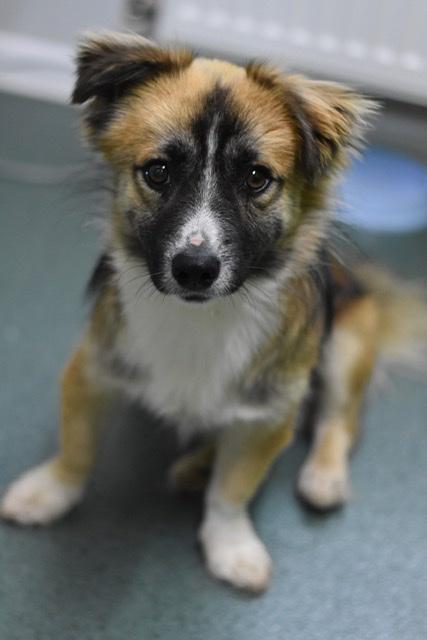 Adoptiehond Banjo