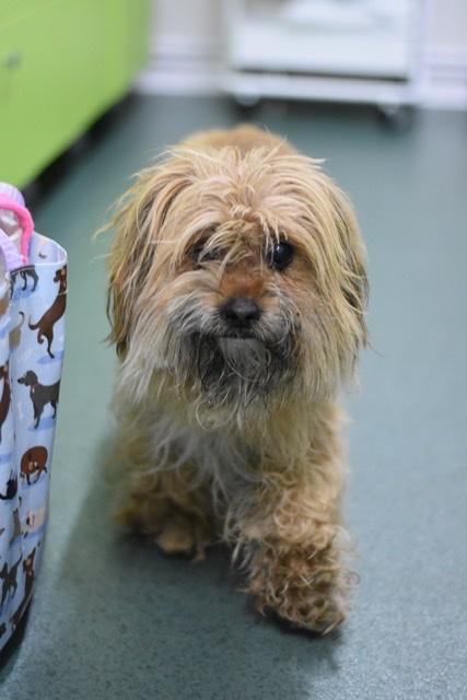 Adoptiehond Benji