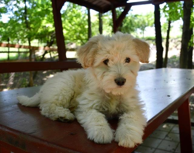 Adoptiehond Bliss