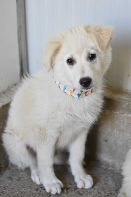 Adoptiehond Beau