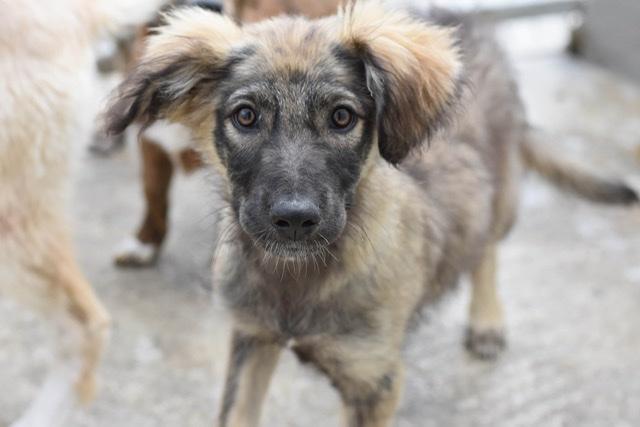 Adoptiehond Martina