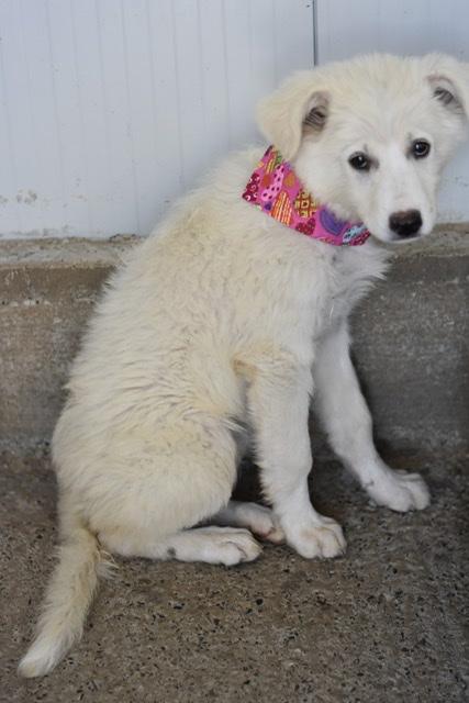 Adoptiehond Belle