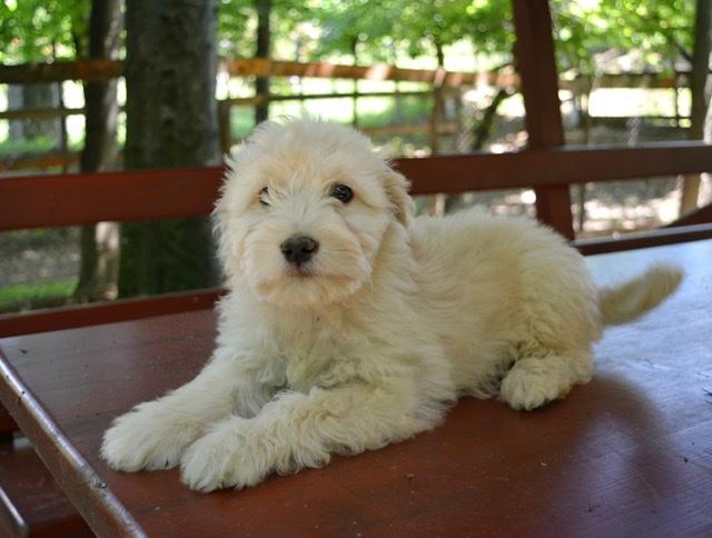.Adoptiehond Bliss