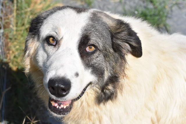 Adoptiehond Toundra